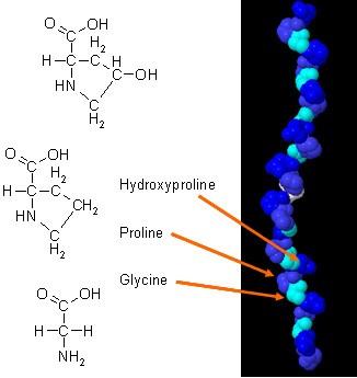 Kemijska struktura in vezava kolagena